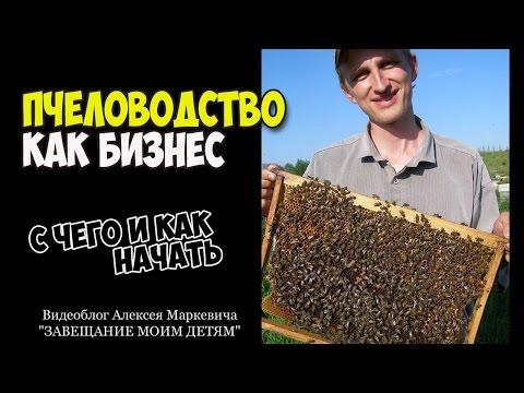 Пчеловодство как бизнес-план. Ответ на вопрос подписчика