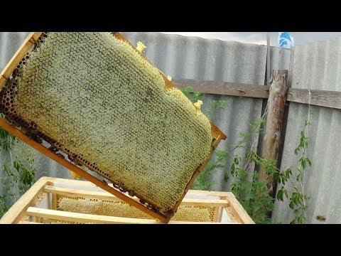 Качаем летний мёд, подсолнух