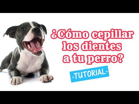 ¿Cómo cepillar los dientes de tu Perro? - Tutorial