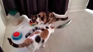Смешные кошки приколы про кошек и котов 2017 #29 Коты и огурцы Funny cats