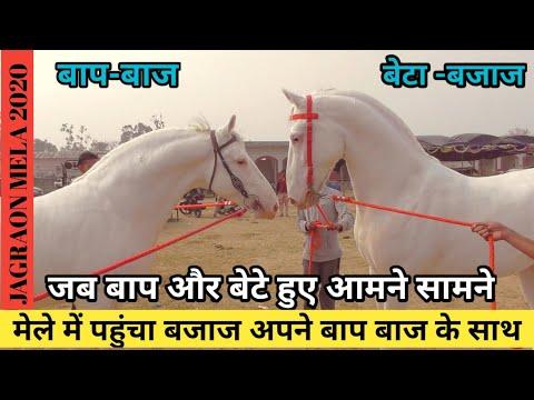 Jagraon Mela 2020-जगराओं मंडी मे बजाज पहुंचा अपने बाप बाज के साथ -(7888503221)