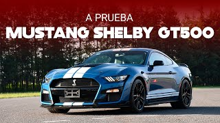 Ford Mustang Shelby GT500, a prueba: un muscle-car de alto calibre que arrebata suspiros