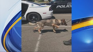 VIDEO: K9 learns to walk on hot pavement in dog booties
