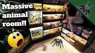 ALL OF MY ANIMALS (150+)!  Full Animal Room Tour