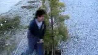 The Origin Of...Beating Around The Bush