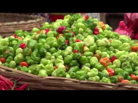 , title : 'PEPPER PRODUCTION TRAINING VIDEO