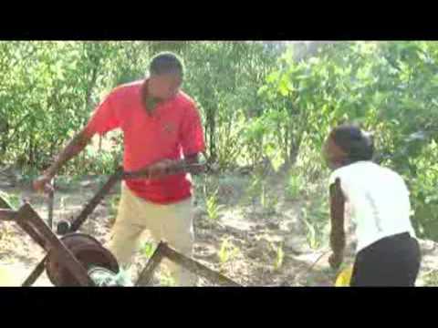 Zvauya Sei Amukurungai - Zimbabwe local drama 2013