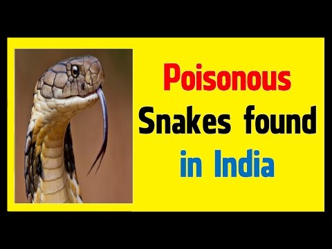 Poisonous Snake found in India - Unknown Facts