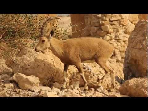 Video of מסלולרי - מדריך טיולים בישראל