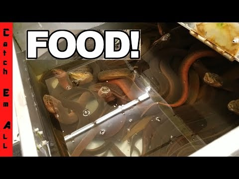 EAT THIS ALIVE without PUKING CHALLENGE! 99% FAIL!