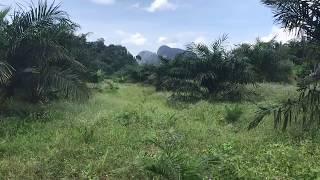 Flat 9 Rai Land Plot for Sale in the Nong Thaley Area of Krabi