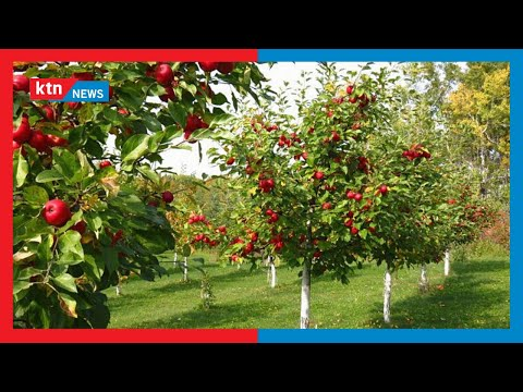 Fruit tree projects in schools picks up
