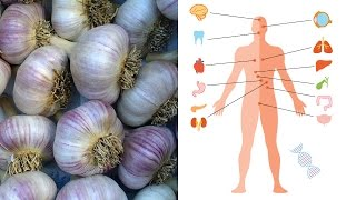 What is Garlic Good For? Benefits and Medicinal Uses for Garlic - Video Youtube
