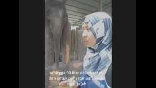 Pusat Konservasi Gajah Kuala Gandah, Lanchang, Pahang