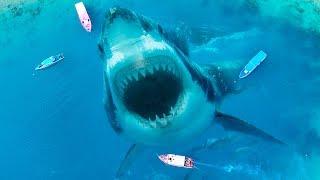 10 Ужасающих Животных, Которые Вымерли, и Это Хорошо