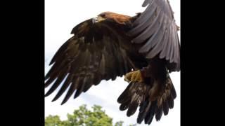 Aguila Aguile - Ivan y Gianni