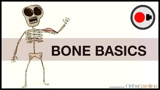 Bone Basics: How They Heal + How to Keep them Healthy