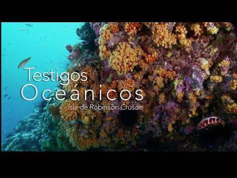 video Testigos Oceánicos: Isla Robinson Crusoe