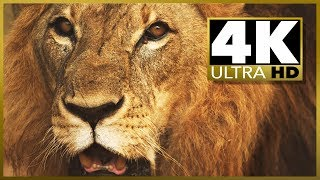 4K ULTRA HD SAMPLER video Resolution Test, stock video HD vs 4K