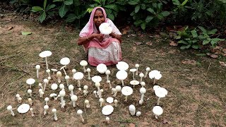 Finding Natural Mushroom and Cooking by our Grandmother   Wild Mushroom Recipe   Village Food