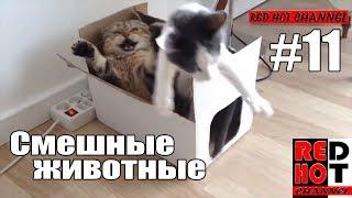 Смешные животные #11 Видео приколы с животными 2018