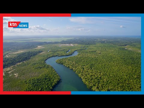 Kenya joins the world in marking International Day for the Conservation of the Mangrove Ecosystem