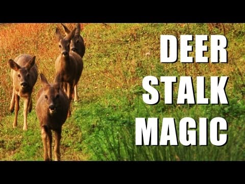 Fieldsports Britain : Close encounters with deer and mapping rabbits  (episode 149)
