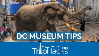 8 Tips for the Smithsonian and FREE museums in DC