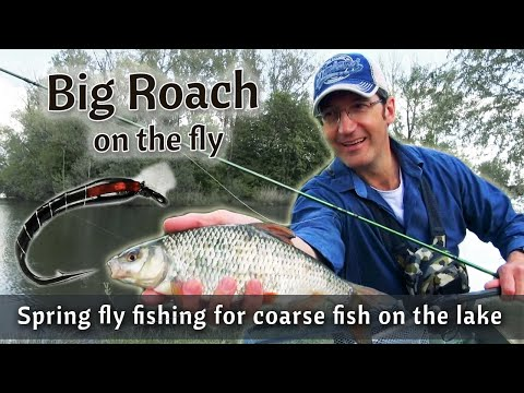Spring fly fishing for roach after breeding | Coarse fishing | Fly fishing stillwater with buzzer