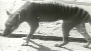 Veni Vidi Vici – Baba Brinkman (feat. Aaron Nazrul)