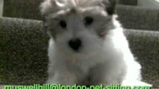 preview picture of video 'Muswell Hill Pet Sitter | Finsbury Dog Walking |  Cat Sitting Muswell Hill'