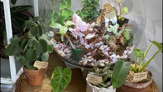 Your Plant Questions Answered!   Houseplants Q&A
