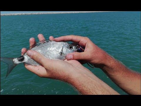 Lo zherekh su che impigliarsi a pesca di trofeo