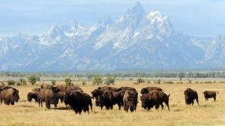 Animals Of Grand Teton National Park