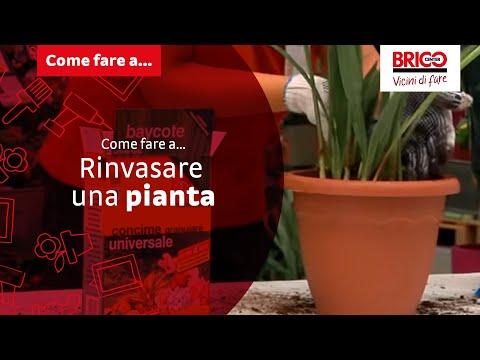 Come fare a... rinvasare una pianta