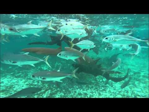 Schnorcheln auf Caye Caulker in Belize