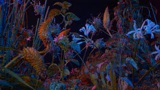 Floating Points   Last Bloom (Official Video)