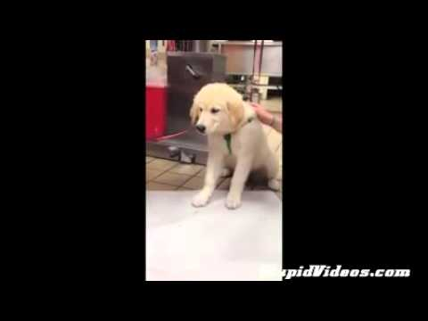 Dog Vomits Up Shark   Funny Animals, Comedy, Dogs, Cat