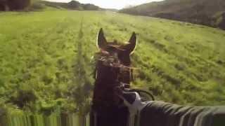 preview picture of video 'Cavalli nel Sorbo - Cesano di Roma'