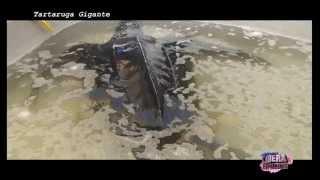 preview picture of video 'Lampedusa Tartaruga Gigante'