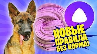 ЯНДЕКС АЛИСА ПРОТИВ ЭРИКИ! НОВЫЕ ПРАВИЛА! / Собака делает слайм из случайных ингредиентов / Yellies