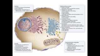 The Endomembrane System And Protein Trafficking