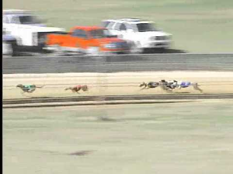 Race 12 American Greyhound Council Flite II