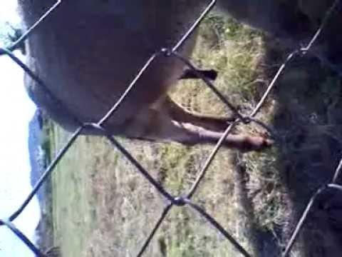 Video di sesso negli animali e nelluomo