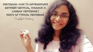 VERTEBRAE | PARTS & DIFFERENTIATION | ANATOMY | SIMPLIFIED ✔