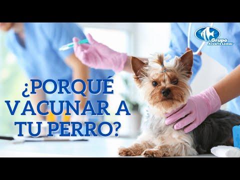High risk of papillomas