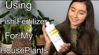 How To Use Liquid Fish Fertilizer For Your Summer HousePlants