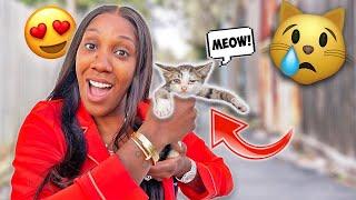We Found BABY KITTENS 🐈   FamousTubeFamily