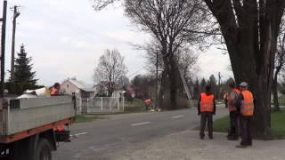 Wycinka drzew - Krosno, Zręcińska