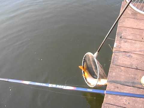 Pesca in previsioni di Mari El